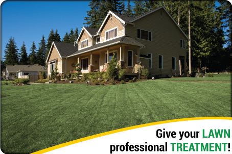 Give your lawn professional treatment!